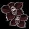 orchidee-noire.png?1947483986